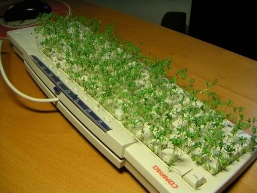 herb garden on a keyboard